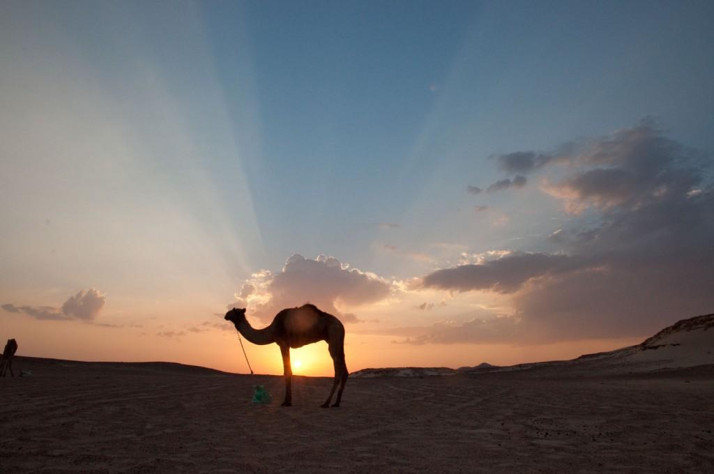 Die Wüste Sinai • Ägypten