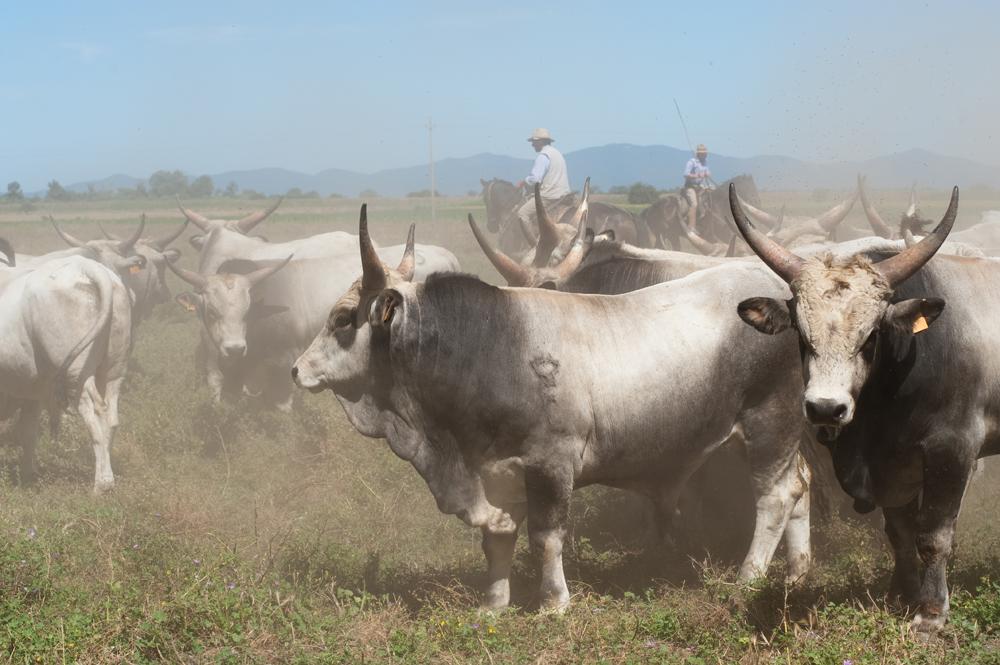 Die Butteri in Maremma • Mittelitalien
